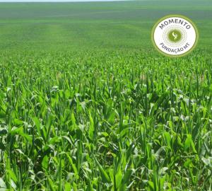 Qualidade Operacional em Pauta - Distribuição de fertilizantes a lanço.