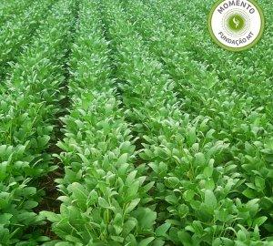 Manejo de biodefensivos em sistemas agrícolas